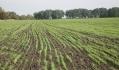 Норми висіву озимої пшениці