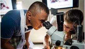Листовая диагностика в растениеводстве