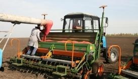 Применение протравителей на озимой пшенице