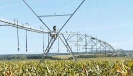 Наличие орошения значительно уменьшит риск недобора урожая от засухи