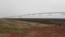 Дощувальні машини на полях Ukrainian Farming Company
