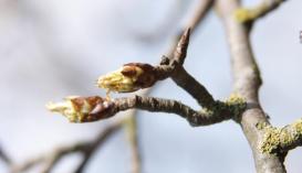 Защита садов от вредителей и возбудителей болезней