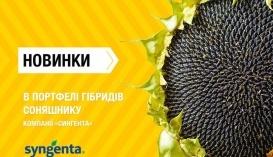 Новинки в портфелі гібридів соняшнику компанії «Сингента»