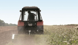 Сидераты - дешевый, природный, безопасный для человека и окружающей среды вид зеленых удобрений