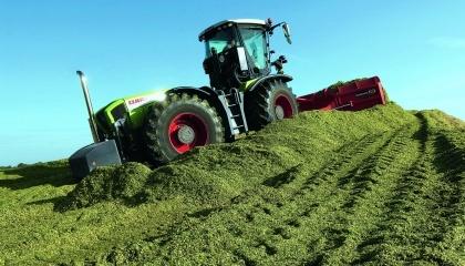Найпоширенішою силосною культурою в Україні єкукурудза. За урожайністю та кормовими якостями вона переважає всі інші зернофуражні культури. На родючих грунтах за дотримання всіх агротехнічних умов кукурудза на силос здатна забезпечити врожайність до 60–80 т/га інавіть вище.