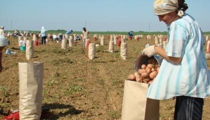 В Украине официально зарегистрированных фермерских хозяйств насчитывается около 30 тыс.