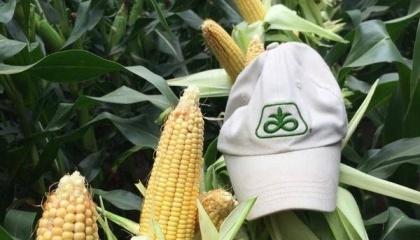 Програму Granular використовують фермери трьох країн. Кадр з відео Granular.ag