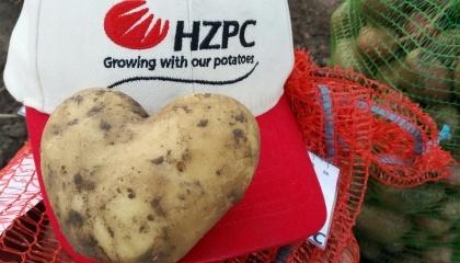 Картоплярські господарства України оптимізували внесення добрив під картоплю