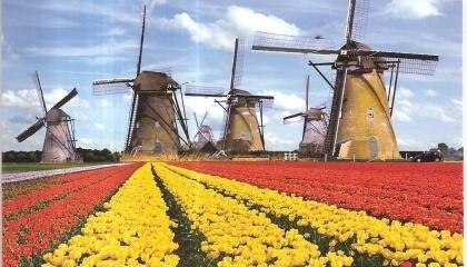 Наиболее перспективный сектор для сотрудничества с Украиной голландский бизнес считает аграрный сектор