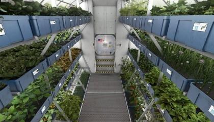 Большой интерес участников Нобелевской недели стартап-проектов Ignatia вызвала LED-ферма