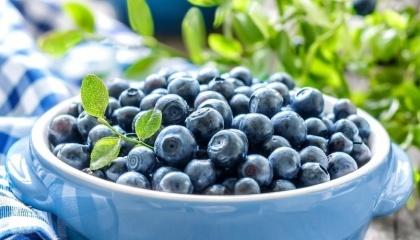 Согласно возможного нововведения, возрастет рентная плата за сбор лесных ягод. В частности, за чернику надо будет платить 0,903 коп./кг