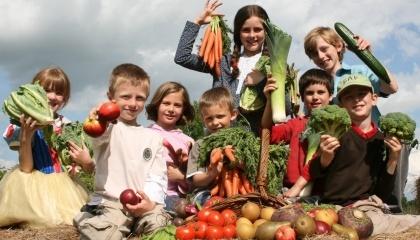 Работа по разработке системы кооперативного образования для детей будет реализовываться в четырех регионах - Ривненской, Хмельницкой, Львовской областях и на Волыни