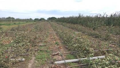 Прогноз Ассоциации «Укрсадпром» по потерям 50% урожая от майских заморозков полностью оправдывается, а град и ураганы, которыми сопровождается лето 2017 года, могут привести к более значительным потерям