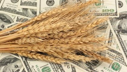 Передовиками із впровадження органічного землеробства стали група «Арніка» і корпорація «Сварог Вест Груп», які мають досвід не тільки виробництва, а й експорту органічної продукції