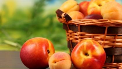 Україна не зможе отримати суттєвої вигоди від зміни клімату - фактично ми вже втратили можливість вирощувати абрикос та персик, під загрозою можливості промислового виробництва черешні