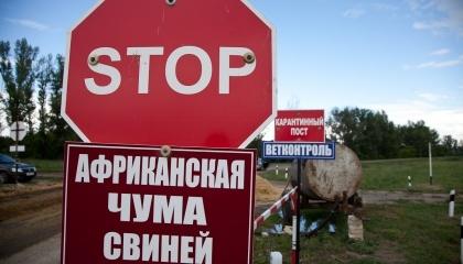 С начала года в Украине зафиксировано 14 случаев АЧС. Начиная с 2012 года, на территории нашей страны регистрировалось 162 случая этой опасной болезни