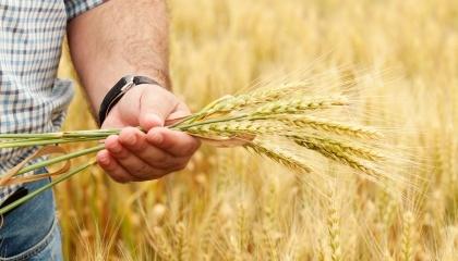 Фінансові установи зацікавлені не в заставі, а в тому, щоб фермер узяв гроші й за певний час повернув їх із відсотками
