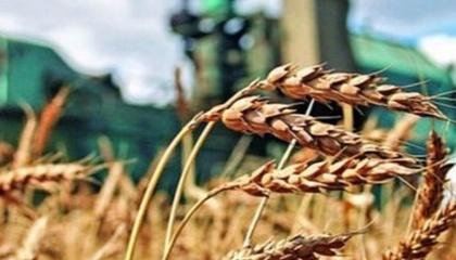 Зараз в Україні працюють 32-35 тис. фермерських господарств, а обсяг фермерського ринку становить 70 млрд грн