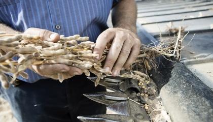 З розширенням портфелю BASF запропонує аграріям більший вибір рішень, в тому числі насіння сої, каноли та бавовни
