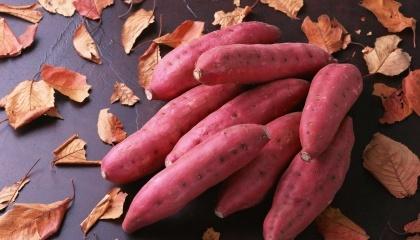 Попри те, що батат називають солодкою картоплею за схожість плодів між собою, вирощування його суттєво відрізняється