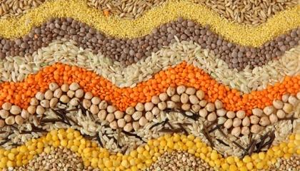 У господарстві заклали дослід із вивчення бінарних посівів, або міксів бобових і злакових