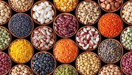 Проблема покупки відповідного посівного матеріалу необхідної якості коштує дуже гостро і стримує розширення площ під цими культурами