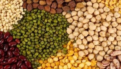 Україна на світовій арені з виробництва зернобобових займає лише 1% від загального виробництва. Просуванню і поширенню практики вирощуваня бобових заважають декілька факторів