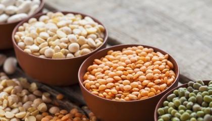 Согласно данным Госкомстата Украины, в 2016 году бобовые культуры вошли в ТОП-5 наиболее прибыльной сельхозпродукции, обеспечив производителям более 76% рентабельности