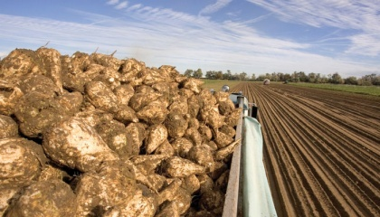 Річна потреба області у цукрі становить близько 104 тис. т. У цьому році регіон буде повністю забезпечений цим продуктом за рахунок власного виробництва