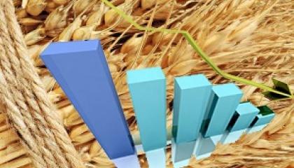 Экспортный рынок Украины не может не реагировать на мировые изменения, поэтому цены украинского зерна также идут вниз