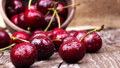 Перспективи українського експорту черешні - у вишнево-черешневих гібридах, за кількістю сортів яких Україна - світовий лідер