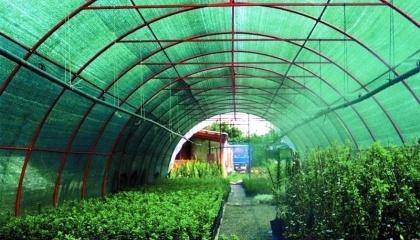 Наиболее эффективным способом сохранения огородины от губительного воздействия солнечного свет считается затеняющая сетка