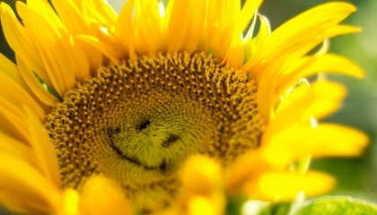 Удачный результат прошлого сезона по подсолнечнику и его урожайности стал совокупностью факторов - как погодных, так и агрономических. В этом году вряд ли аграрии получат такие же удачные результаты