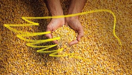 Представників усіх господарств-переможців компанія Monsanto запросила до Франції