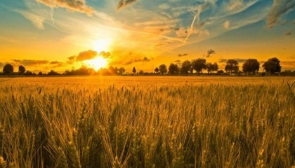 На мероприятии будет представлено более 80 гибридов различных культур и 100 единиц современной сельскохозяйственной техники, а также представлен широкий спектр сельскохозяйственной химии и стратегий для ее применения