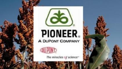 DuPont Pioneer та United Sorghum Checkoff Program у результаті трирічної співпраці отримали дві гаплоїдні лінії сорго, які дозволять прискорити процес виведення нових гібридів вдвічі