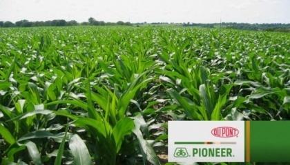 Все семена, произведенные и упакованные в любом из заводов DuPont Pioneer в любой стране мира, по всем показателям отвечают высоким требованиям и единым стандартам