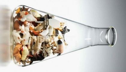 До 2050 р. людство може зіткнутися з гострим браком їжі, пророкують експерти Всесвітнього фонду дикої природи (WWF)