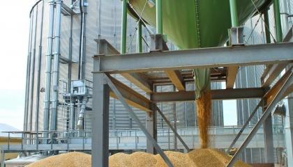 Рост перевалки зерна в мелких портах вызван тем, что поставка зерновых в крупные порты затруднена с суши