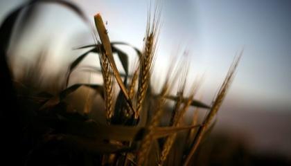 Расширение квот увеличит экспорт сельхозпродукции в ЕС, но промпроизводство изживет себя