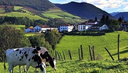 Сейчас в Ивано-Франковской области насчитывается 518 фермерских хозяйств, хотя в прошлом году их было 550