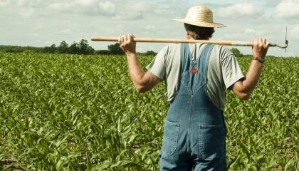 Дрібні та малі фермери взяли всього 5 млн, тобто, використали лише 3% від загальної суми бюджетної програми відшкодування сплати відсотків за банківськими кредитами