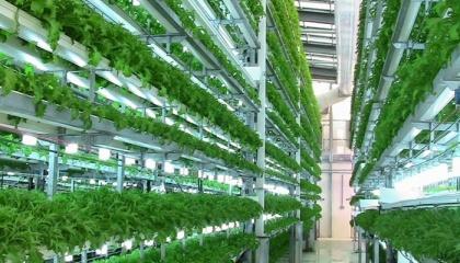 В Нидерландах поставщик фруктов и овощей Staay Food Group ведет строительство вертикальной фермы площадью 900 м2, общая площадь которой составит 3 тыс.м2