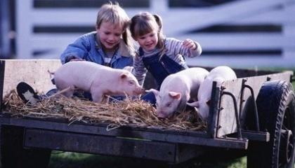 Полтавська облдержаміністрація планує відшкодування витрати сімейним фермам, ОСГ та СФГ з вирощування ВРХ, кіз, овець, хутрових тварин