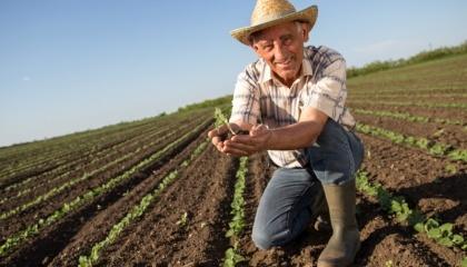Профессиональный праздник - День фермера предлагается отмечать ежегодно 19 июня