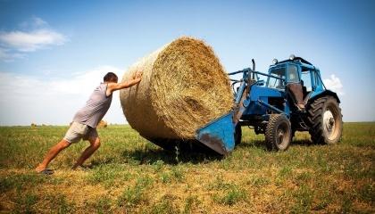 Последние три года фермеров методично лишают льгот. Украинские фермеры вынуждены жить по законам джунглей
