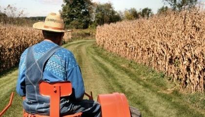 Фермеры, которые обрабатывают небольшие участки, начали показывали свои истинные урожаи. Таким образом, увеличился валовой сбор