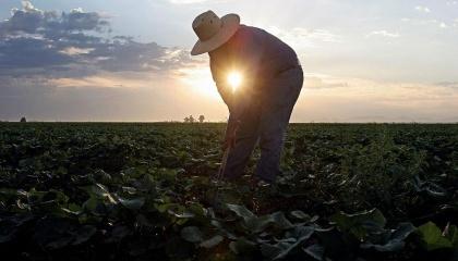 Поддержав фермеров, правительство рассчитывает получить эффект в виде возрождения села