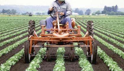 Для того, щоб схилити малих фермерів на свій бік, уряду потрібно запропонувати їм певний бонус, наприклад, доступ до дешевих кредитів