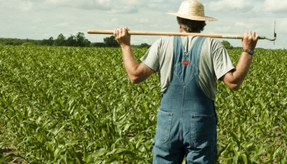 фермерство